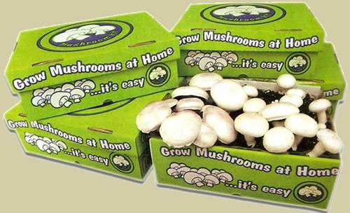 Mushroom-kits-easy-as-123