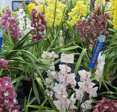 Orchid-show-2011-0013