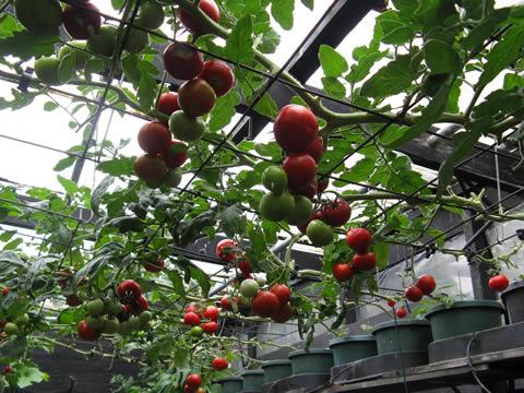 Greenhouse Gardening Australia