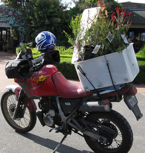 Motor-bike-with-plants2