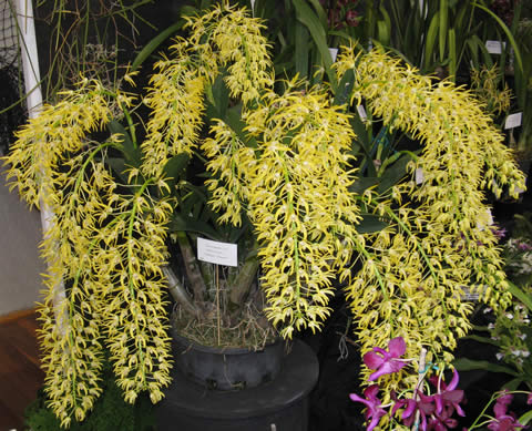 Orchid-spectacular-8